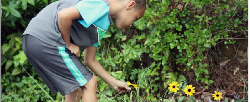 boy bends down to pick a yellow flower in tall grass near bushes - summertime scene